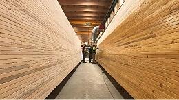 碳化木材的特性