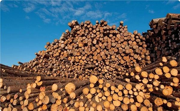 俄罗斯松木材