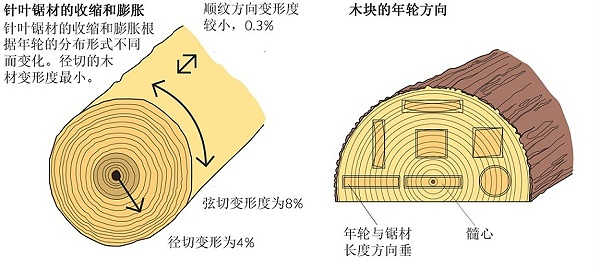 树的年轮及纹理