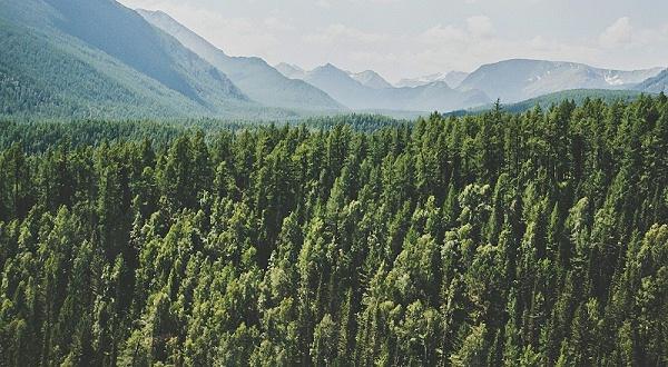 俄罗斯森林
